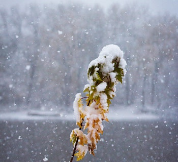 Snow-covered branch with snowy lake in background